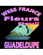 FLEURS DEUIL LA GUADELOUPE