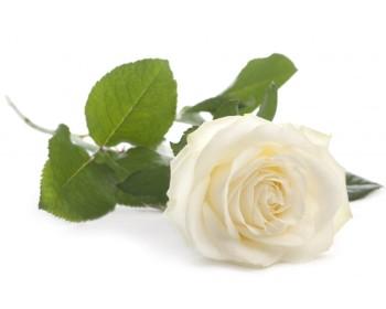Livraison de fleurs en France métropolitaine, en Corse, en Martinique, à La Guadeloupe, en Guyane Française, à St Pierre et Miquelon, à l'International.
